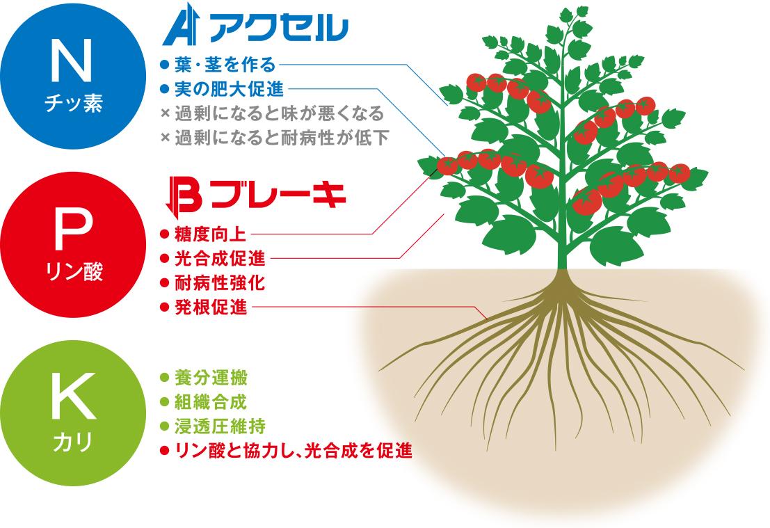 作物を育てるのに必要な3大要素