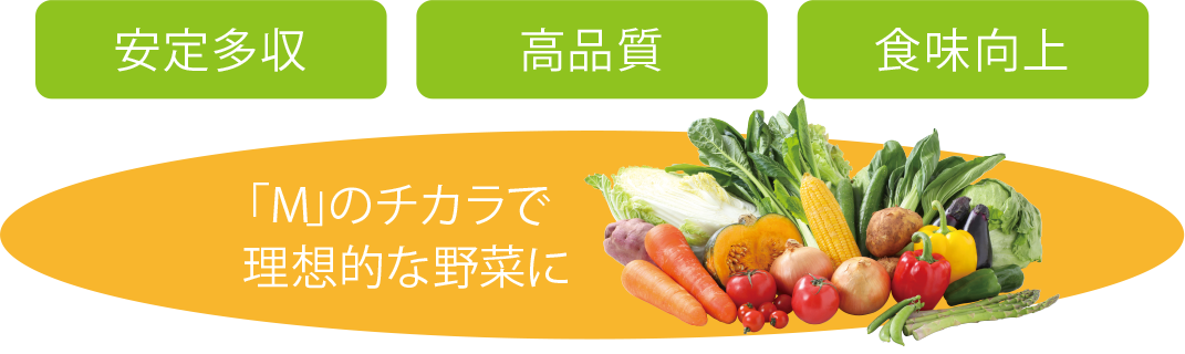安定多収・高品質・食味向上/「M」のチカラで理想的な野菜に