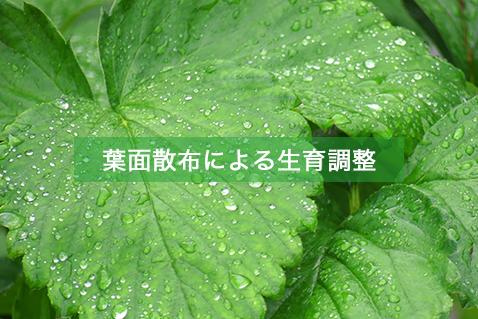 葉面散布による生育調整