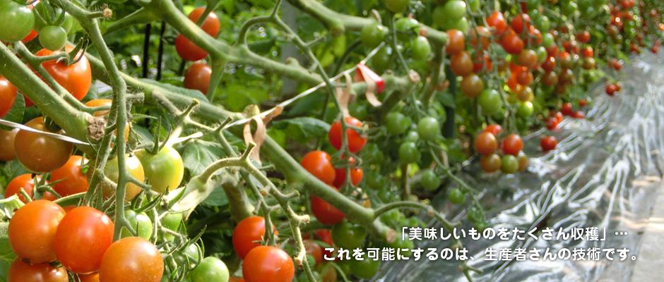 「美味しいものをたくさん収穫」… これを可能にするのは、生産者さんの技術です。