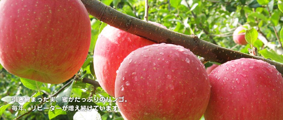 引き締まった実、蜜がたっぷりのリンゴ。 毎年、リピーターが増え続けています。