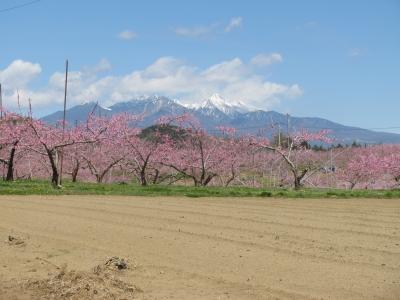 八ヶ岳とモモの花