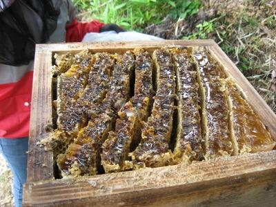 蜂の巣断面