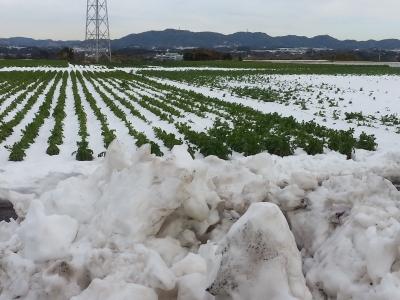 三浦半島雪景色